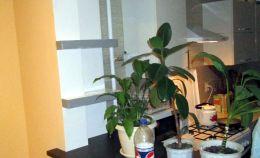 Полка между кухней и балконом под цветы